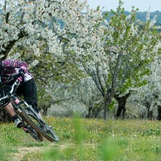 10 04 Cerisier 1
