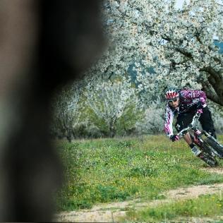 10 04 Cerisier 3